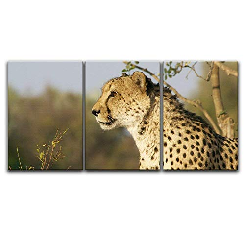 3 Panel A Leopard Staring at Far Away x 3 Panels