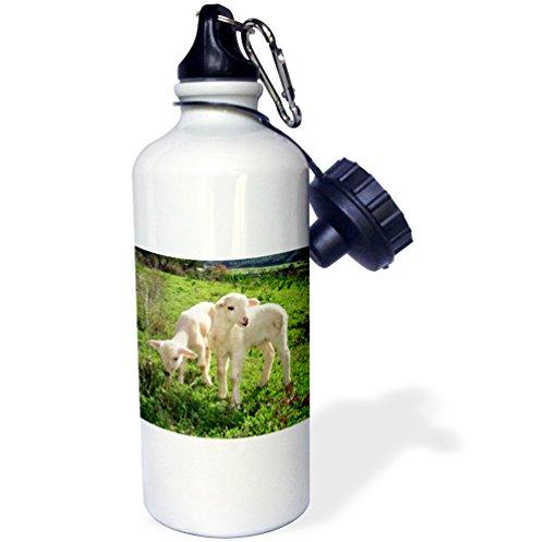3dRose wb_46672_1 Twin Lambs-Animal, Ewe, Farmyard, Flock, Herd, Lamb, Lambs Sports Water Bottle, 21 oz, White
