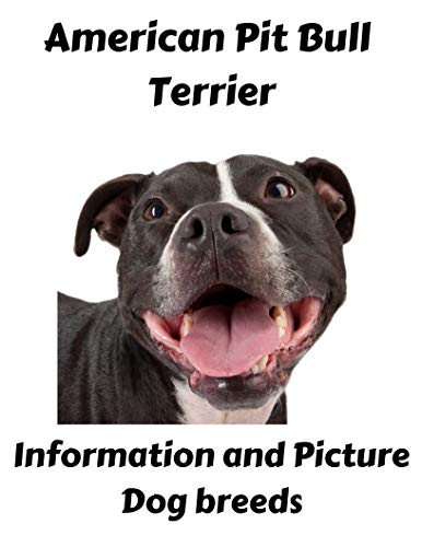 - pitbull books : American PitBull Terrier Information with Pictures ( Pitbull Dog breeds )