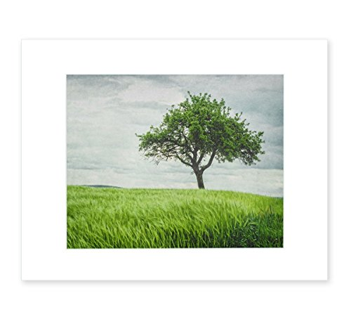 Farmhouse Rustic Wall Art, English Cottage Decor, Rural Countryside Landscape Picture, 8x10 Matted Photographic Print (fits 11x14 frame), Tree in a Field'