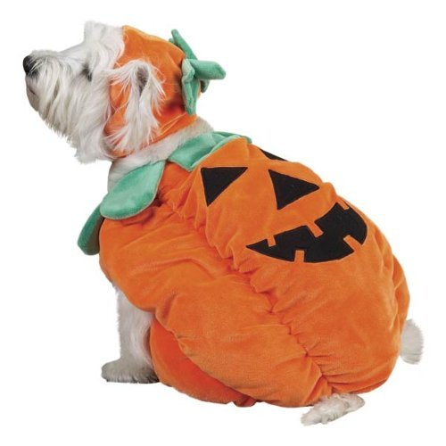 Zack & Zoey Pumpkin Pooch Dog Costume, Small, Orange