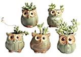 """SweetLifeIdea 2.5"""" Tall Ceramic Owl Garden Decor Planters and Pots Set for Flowers and Succulent Plants and Cactus 5pcs (Green)"""