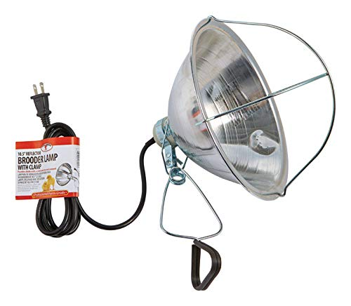 - Little Giant Brooder Reflector Lamp, 10.5-Inch