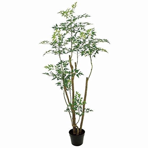 人工観葉植物 ポリシャスフルティコサ6F 高さ180cm fg18100 B0728KSXDD