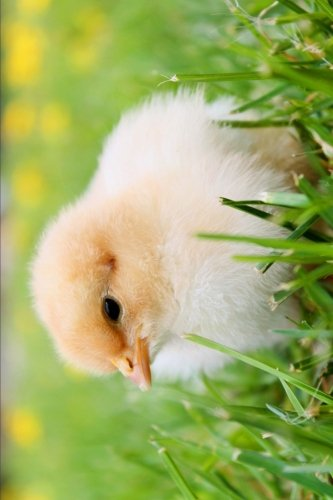 An Adorable Little Yellow Baby Chick in the Spring Grass Journal: 150 Page Lined Notebook/Diary