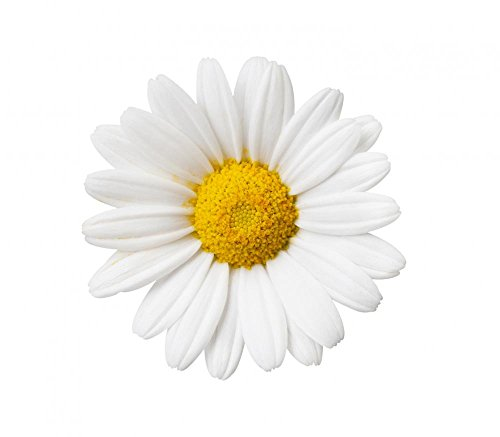 Wallmonkeys Flower Decals - Little White Daisy Peel and Stick Wall Decals WM125524 (24 in W x 21 in H) (Dropship Flowers)