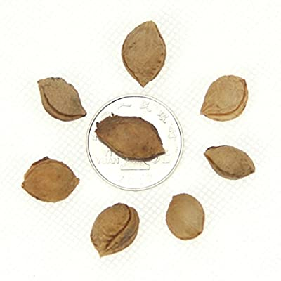 HOTUEEN 10pcs/Bag Plum Fruit Seeds Home Garden Planting Fruit Tree Seeds Fruits : Garden & Outdoor