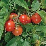 Tumbler Cherry Tomato - 10 Seeds