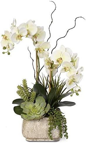 Amazon Com Jenny Silks Real Touch Cream Green Phalaenopsis Silk Orchid Arrangement With Succulents In A Stone Pot Kitchen Dining