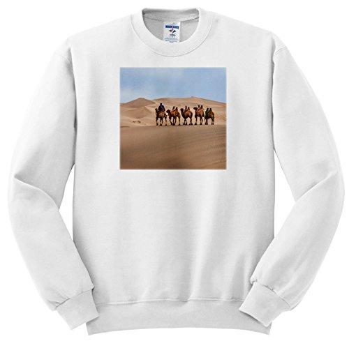 Gobi Desert Camel - 7
