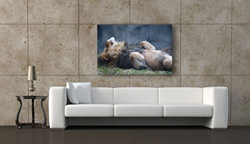 Lion Photography Soothing CANVAS Wall Art for Home or Office REST or CHEER Inspirational Quotes PEACE and SAFETY Psalm Bible Verse Birthday Gift for Father Ready to Hang Picture 8x12 12x18 16x24 20x30