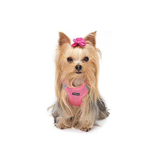 Arneses: Amazon.es: Productos para mascotas