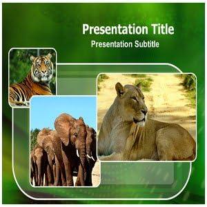 Amazon Com Wild Animals Powerpoint Presentation Slides