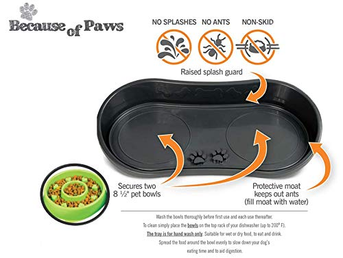 Because of Paws Non-Skid Pet Bowl Tray with 2 Slow Down Bowls Set - For Small to Medium Dogs - Protects Floor from Food and Water ()