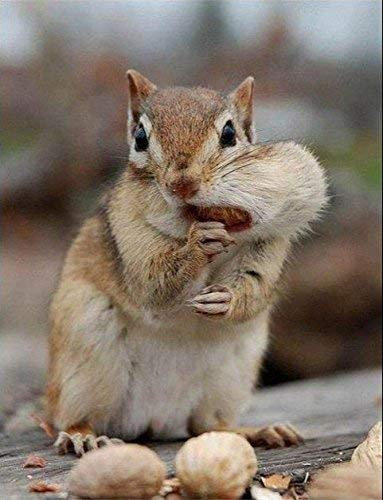 Virginia Peanuts Premium Grade Raw Red Skin Animal Peanuts for Squirrels, Birds, Deer, Pigs and a Wide Variety of Wildlife/Bulk Nuts/Blue Jays/Cardinals/Woodpeckers/Parrots/Doves (50 lbs) by WAKEFIELD PEANUT COMPANY A TRADITION OF EXCELLENCE SINCE 1965 (Image #2)