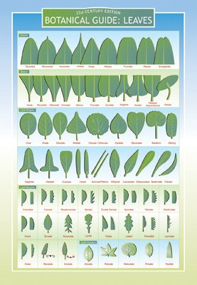 Botanical Guide to Leaves Two Sided Color Informational Chart