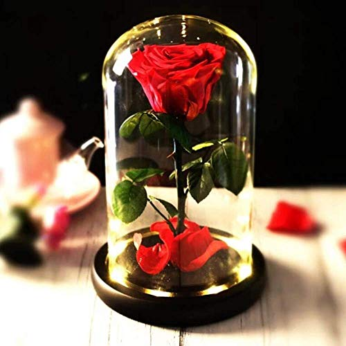 Preserved Real Rose 13〃H Beauty and The Beast Enchanted Rose, Preserved Fresh Rose in Glass Dome Romantic Forever Gift for Her Wedding Valentine's Day Christmas Mothers Day (Preserved Real Rose)