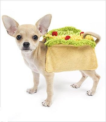 Taco  (Piece Of Cheese Halloween Costume)