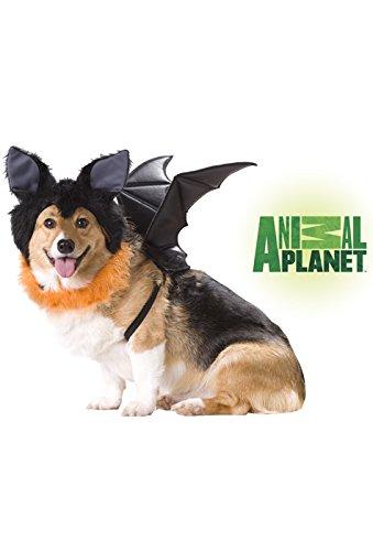 Animal Planet PET20103 Bat Dog Costume, Medium