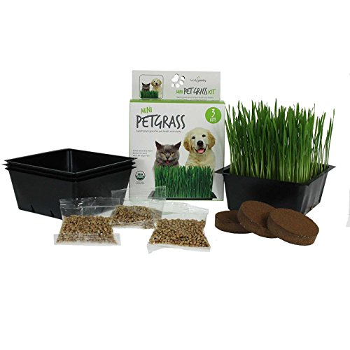 Mini Organic Pet Grass Kit - Grow Wheatgrass for Pets: Dog, Cat, Bird, Rabbit, More - Includes Trays, Soil, Wheat Grass Seeds, Instructions by Wheatgrass Kits (3 Kits)
