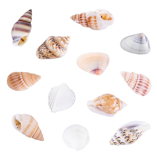 Tiny Miniature Fairy Garden Beach Critter Seashells Marine Life Collection for Arts & Crafts Projects, Decorations, Party Favors, Invitations (2 Tbsp Pack) Summer Garden Collection