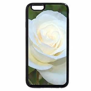 iPhone 6S Plus Case, iPhone 6 Plus Case, White Satin Rose