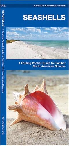 Seashells: A Folding Pocket Guide to Familiar North American Species (A Pocket Naturalist - Map Seashell