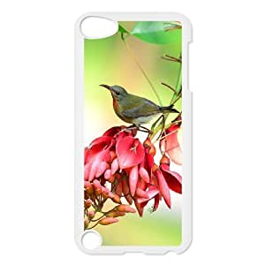 Ipod Touch 5 Bird Phone Back Case Art Print Design Hard Shell Protection AQ073914