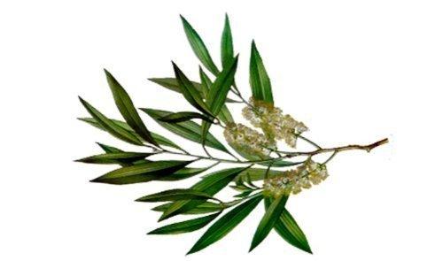 3 Pack Tea Tree Herb & Mint Hair & Body Soap Bar