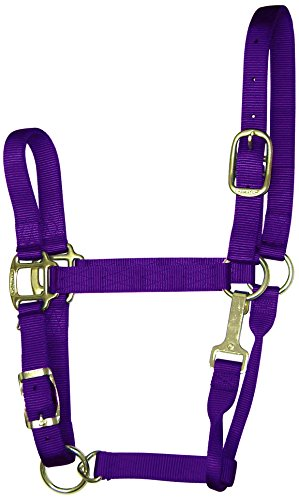 Hamilton Adjustable Chin Halter - Hamilton 1-Inch Nylon Adjustable Quality Halter with Chin Snap for 500 to 800-Pound Horse, Small, Purple