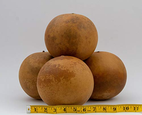 Cannon Ball Gourds, Box of 4, washed and ready