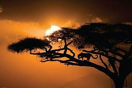 (African Sky Poster 36 x 24in)