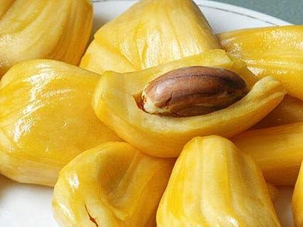 Amazon com : Two dormant Jackfruit seedlings/Artocarpus