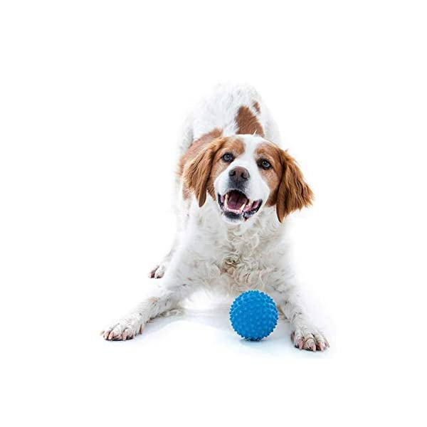 Aussie Dog Soft Catch Ball, Blue, Blue Click on image for further info. 3