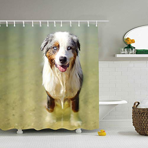 Australian Shepherd Dogs Shower Curtain Set, Thick Polyester Fabric, Mildew Mold Resistant Waterproof Machine Washable 71 × 71 -