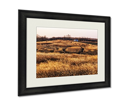 Ashley Framed Prints, Wild Reeds In Hane - Eulalia Grass Shopping Results