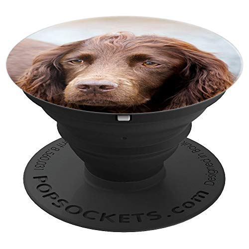American Brown Water Spaniel - PopSockets Grip and Stand for Phones and Tablets