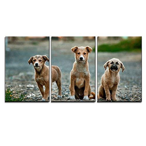 Three Cute Little Dog x3 Panels