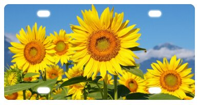 Sunflower Beautiful Flower Novelty License Plate Decorative Front Plate 6