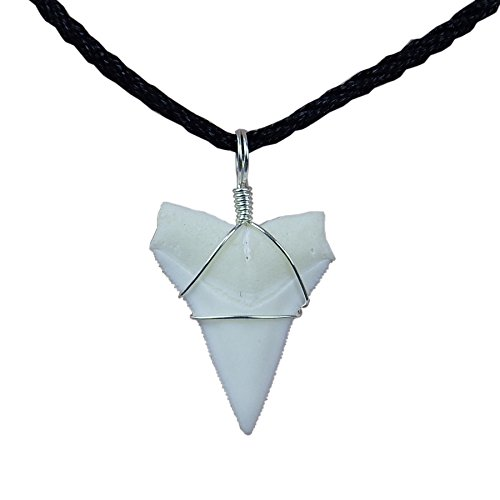 GemShark Real Shark Tooth Necklace White Tip Bull Sterling Silver Charm Pendant for Boys Girls Unisex (1.0 inch White -
