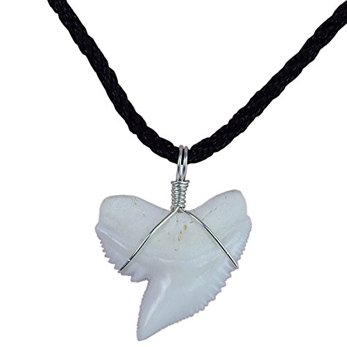 GemShark Real Tiger Shark Tooth Necklace Sterling Silver Charm Pendant for Boys Girls Unisex Sharks Jewelry (1.0 in Tiger Shark) (Tiger Real)