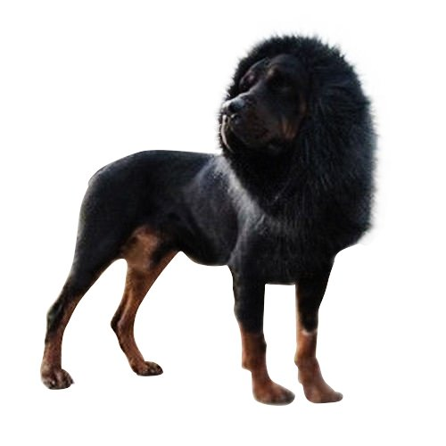 GSD Shopping Go Dog Halloween Costumes Fancy Dress Up Lion Mane Wig with Ears for Dogs Festival Dress -