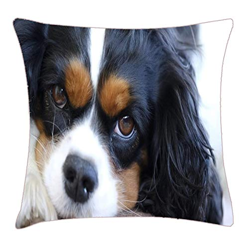 HFYZT Golden Retriever Puppy Dog,Cavalier King Charles Cavalier King Charles Spaniel Pillow Cover Standard Throw Pillowcase 18X18 - Cavaliers Plush