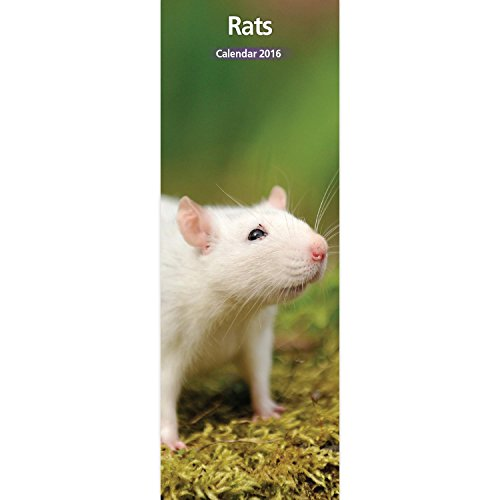 Rat 12 Month 2016 Slim Calendar