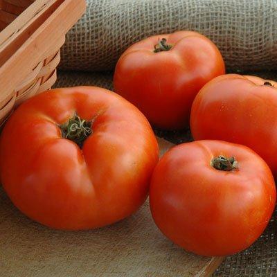 Amazon.com: Primo de tomate rojo: Jardín y Exteriores