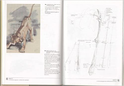 Artists guide to animal anatomy an illustrated gottfried bammes artists guide to animal anatomy an illustrated gottfried bammes 9781898250364 amazon books fandeluxe Choice Image