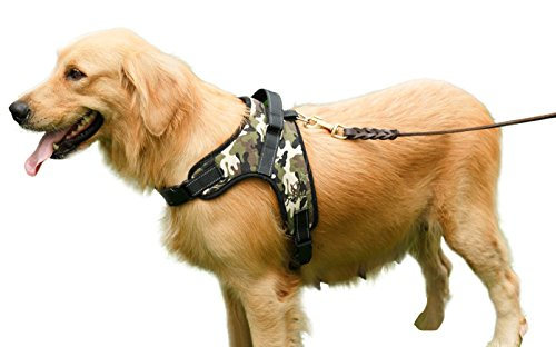 xl dog harness bulldog - 3