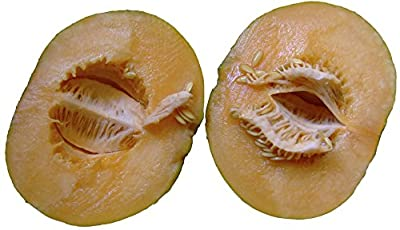 Heirloom Noir Des Carmes Cantaloupe Seeds