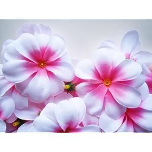 "(24) White Pink center Hawaiian Plumeria Frangipani Silk Flower Heads - 3"" - Artificial Flowers Head Fabric Floral Supplies Wholesale Lot for Wedding Flowers Accessories Make Bridal Hair Clips Headbands Dress 119"