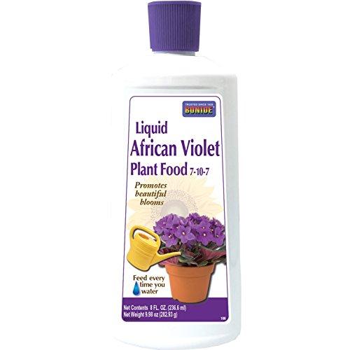Flowering African Violet (Bonide 106 Liquid African Violet Plant Food, 8 oz)